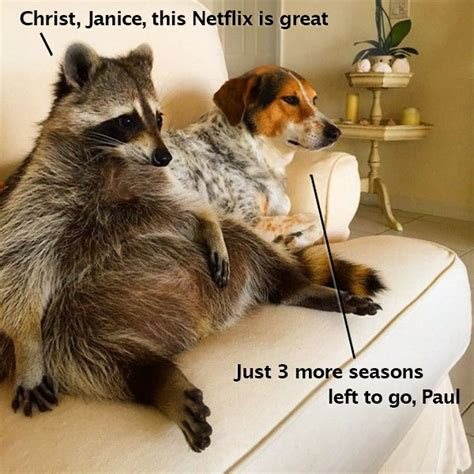 dog watching tv on couch 33 random funny pics of inspirational weirdness team