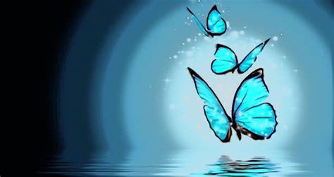 imagenes mariposas para facebook el circo de las mariposas el vestuario