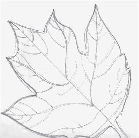 Drawing Leaves by Laurens Most Successful Leaf Drawings In