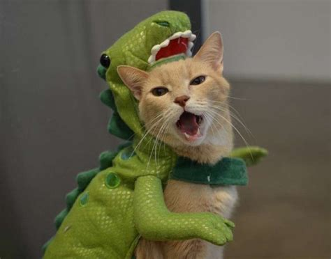 30 Cat Costumes That Are Too Cute   Costume Wall