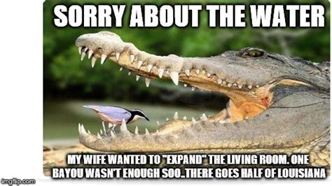 Gator Meme - gator wife imgflip