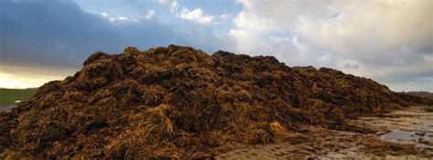 compost animal waste vermi solutions cc