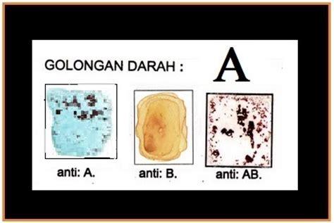 Serum Golongan Darah uji golongan darah materi biologi