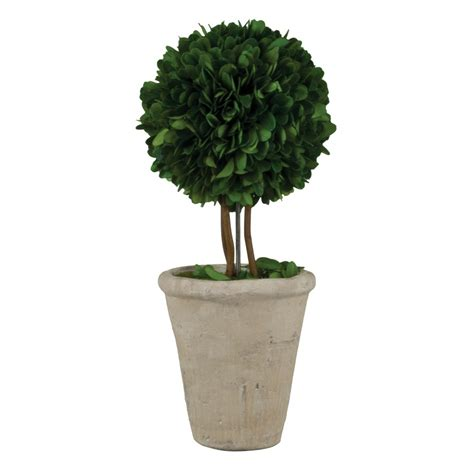 wholesale topiary 5 quot boxwood topiary with white pot pride garden products