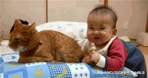 imagenes chistosas gif gifs de gatos chistosos imagenes chistosas