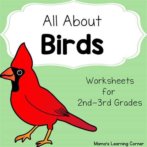 birds worksheet packet for 1st 3rd graders mamas