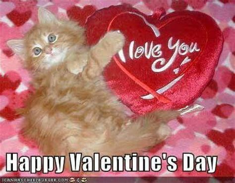 happy valentines day cat 17 best images about cats s on