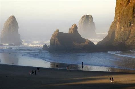 tide pool on cannon beach on oregon coast picture of