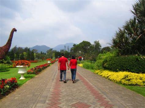 Bunga Jalar Hitam 02 jalan jalan picture of taman bunga nusantara cianjur