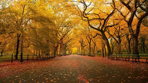 Autum In autumn in the park wallpaper nature wallpapers 15609