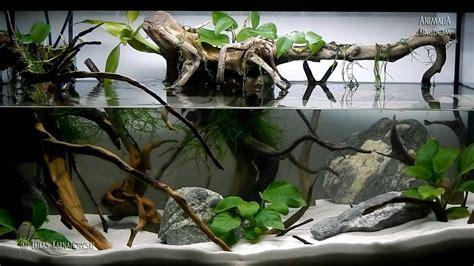 aquascape tree aquascape setup series root of a tree animalia kingdom show youtube