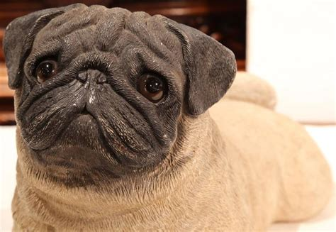 early pugs early 20th century terracotta pug puppy with glass for sale at 1stdibs