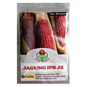 Benih Jagung Ungu benih dramaga jagung ungu ipb j2 50 biji jual tanaman