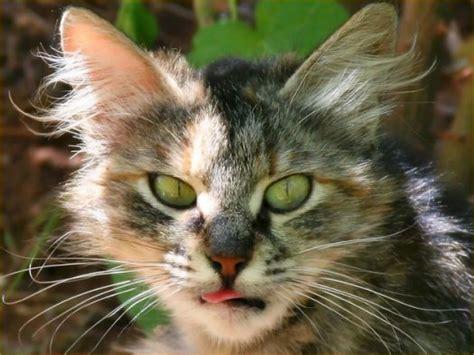 cat episodes cat of fame
