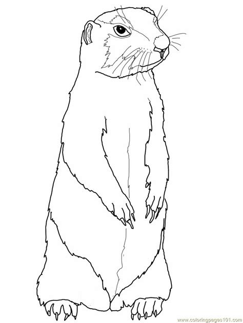 coloring pages prairie gopher or prairie dog animals