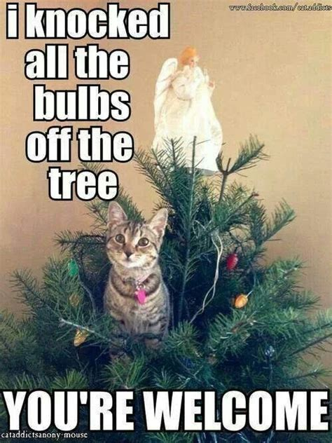 your welcome cats cats cats pinterest