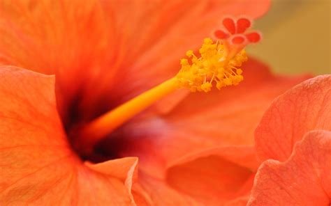 Orange Flowery picalls orange flower by badh13
