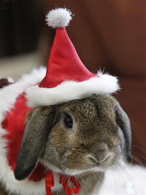 santa paws  ridiculously cute holiday pet  brit