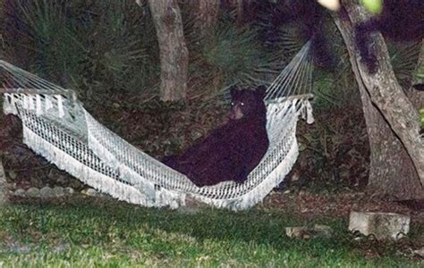 l orso della casa florida se l orso decide di fare un pisolino in giardino
