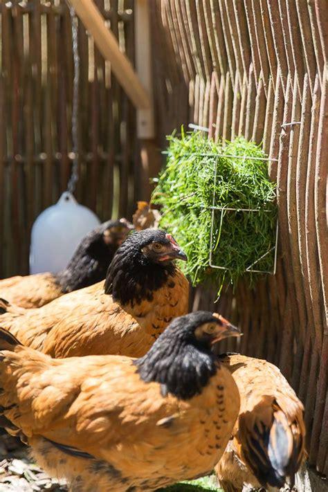 hühnerhaltung im garten die besten 25 h 252 hnerhaltung im garten ideen auf