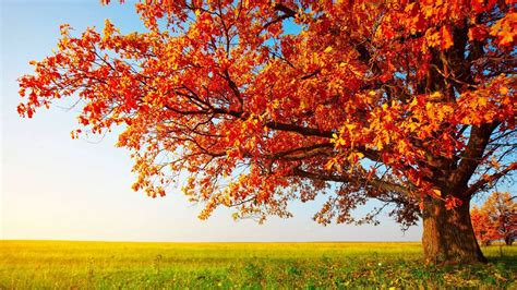 HD Wallpapers 1080p Nature autumn - Mobile wallpapers Fall Nature Wallpaper