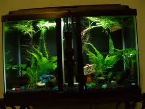 Betta than a Bowl: betta fish aquariums & betta tank inspiration