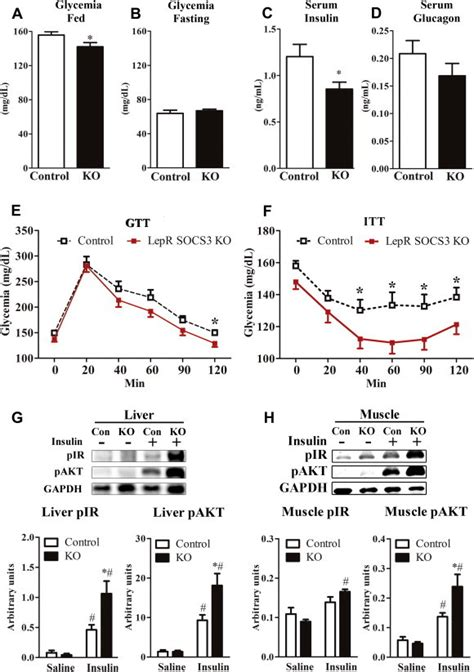 Serum Glucogen lepr socs3 ko mice are protected from insulin resistance induced by