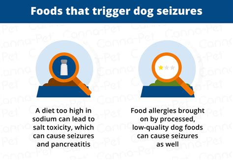 can dogs seizures what triggers seizures in dogs canna pet 174