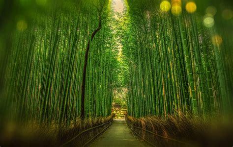 Wallpaper Bambu Hijau 10 Meter 45 Cm gambar pohon alam hutan cabang cahaya bokeh menanam bidang padang rumput sinar