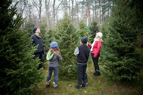 catchy collections of christmas tree farm tennessee