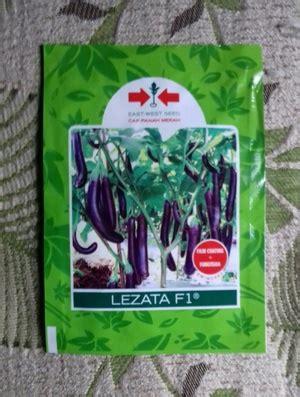 Bibit Terong Hibrida jual bibit benih terong ungu lezata 1100 biji