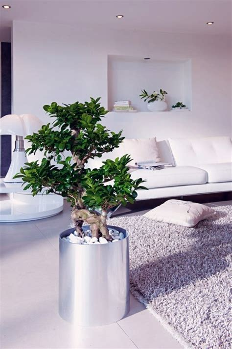 plants for bedrooms feng shui feng shui plants for harmony and positive energy in the