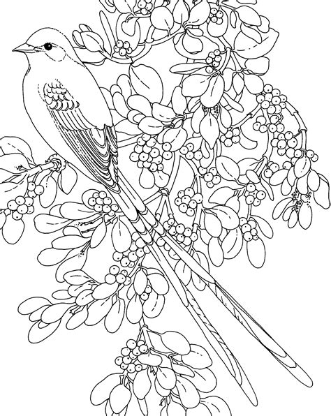 coloring pages of state birds and flowers flower page printable coloring sheets and flower