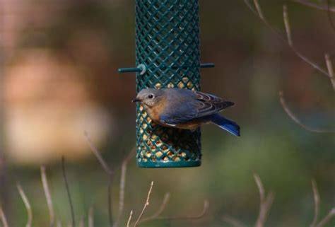 indiana backyard birds 17 best images about nature on pinterest northern