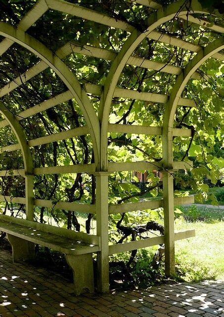Garden Arch For Grapes 25 Best Ideas About Grape Arbor On Arbors