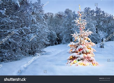 snowball lights for christmas tree tree snow colored lights stock photo 62574658