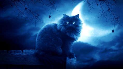 wallpaper cat night moon hd wallpapers wallpaper cave