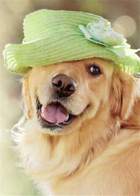golden retriever with green golden retriever green hat 1 card 1 envelope avanti s day card from curiosities greeting cards and papercards