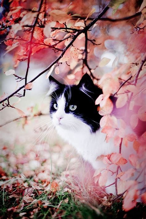 lovely like blossom cute gt 1000 images about her pink autumn on pinterest cute