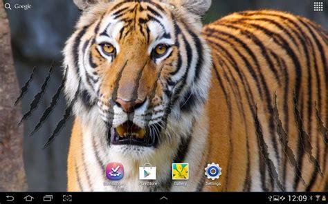 wallpaper animasi tiger download gratis harimau latar belakang animasi gratis