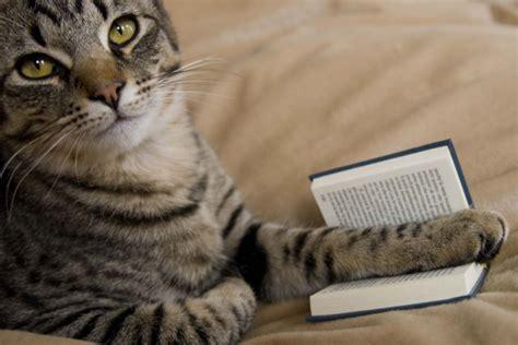 libro un gato y un libros recomendados para amantes de los gatos