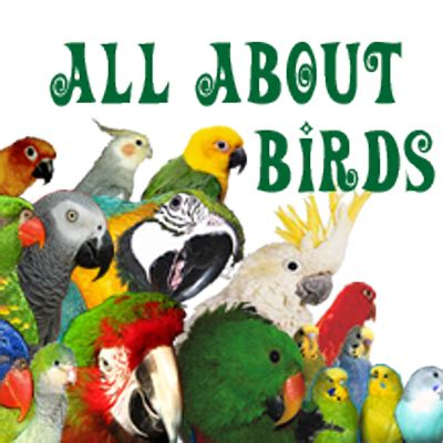 all about birds allaboutbirds twitter