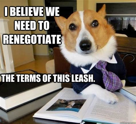 Corgi Lawyer Meme - lawyer dog meme