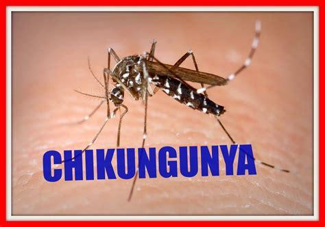 imagenes groseras sobre el chikungunya chikungunya y dengue chikungunya and dengue youtube