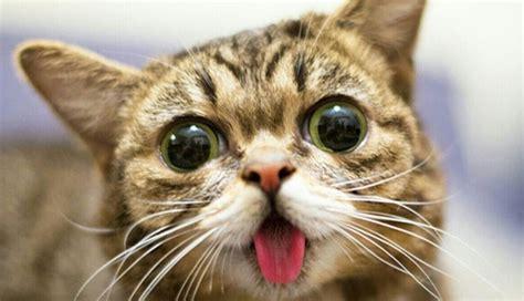 cat episodes cat www pixshark images galleries with a bite