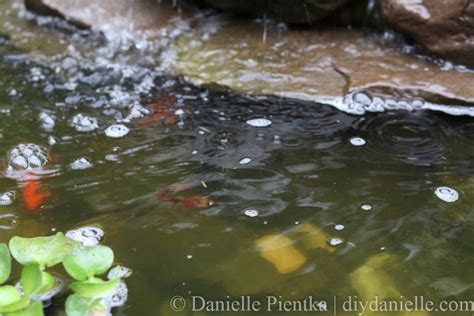 uv light for pond algae clearing algae from a pond with a uv light diy danielle