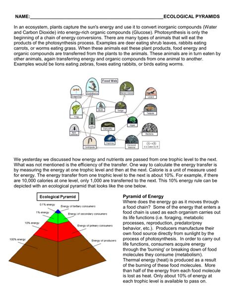 Ecological Pyramids Worksheet by Ecological Pyramids Worksheet Worksheets Releaseboard