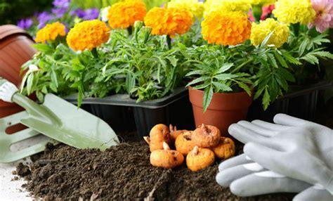 piantare fiori fiori da piantare a aprile per un balcone sempre