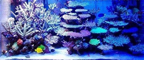 Aquascape Inspiration Beautiful Coral Reef Aquarium Aquarium Hobbyist Blog