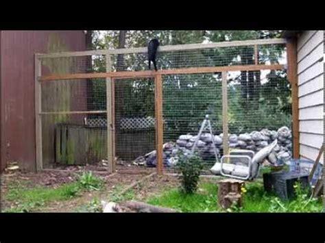cats  climbing  fence